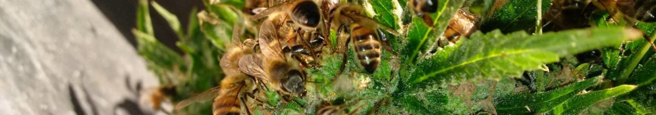 elhalt méhek kezelése pikkelysömörhöz