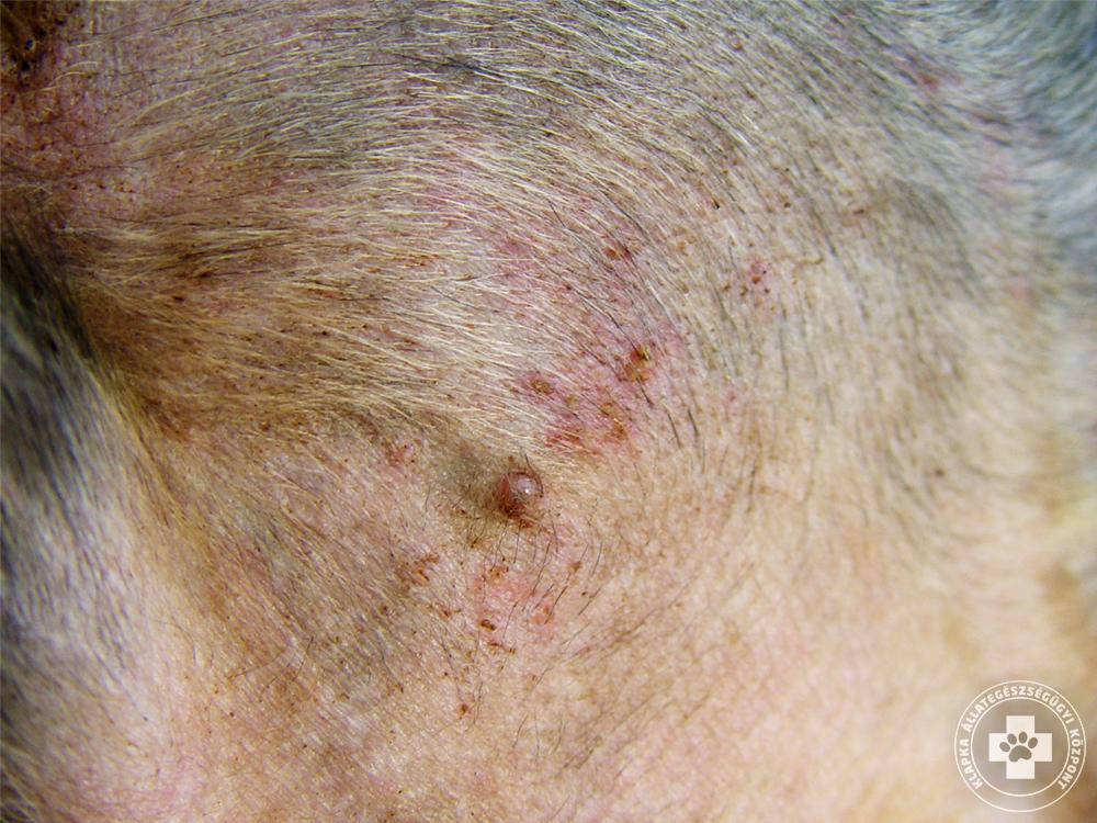 vörös foltok az arcon az orr mindkét oldalán hogyan lehet eltávolítani a vörös foltokat az arc sebében