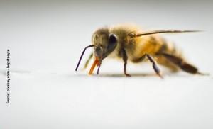 A méh felépítése és működése - HáziPatika