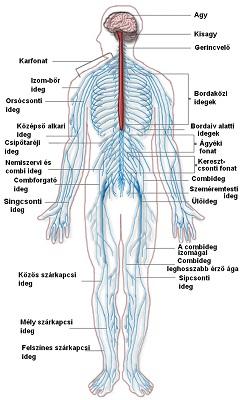 hogyan lehet gyógyítani az ideg pikkelysömörét kiütések vörös foltok formájában a kezeken és a lábakon